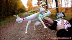 Syma X8W Drone - FPV Live camera - IOS & Android